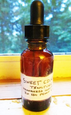 Homemade Sweet Cicely TIncture ~ Photo taken by Adrian White