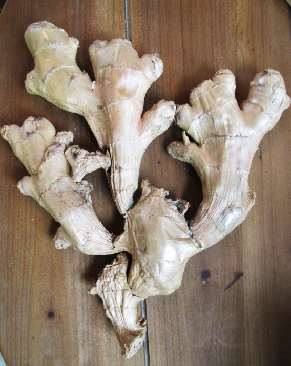 ginger-root-herbalism