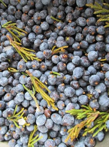 cedar-berries-herbalism