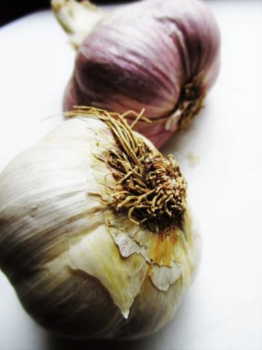 garlic-herbalism