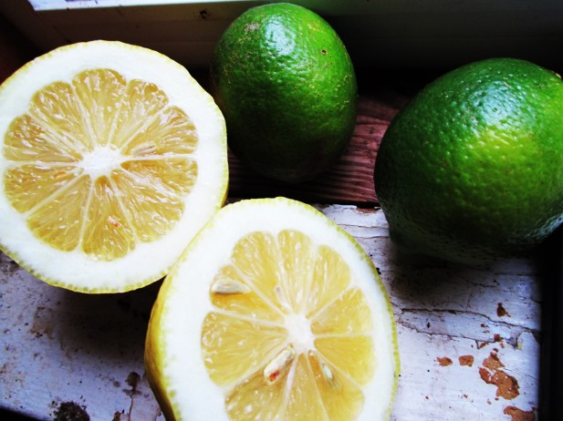 citrus-lemon-lime-herbalism