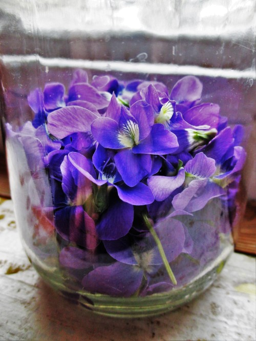 Violet Flowers in Jar | DeerNationHerbs.com