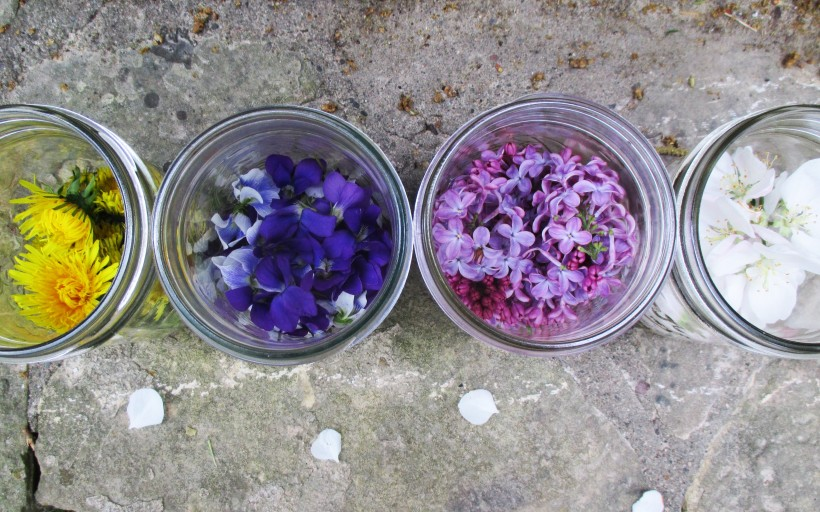 Above View Jars with Flowers | DeerNationHerbs.com
