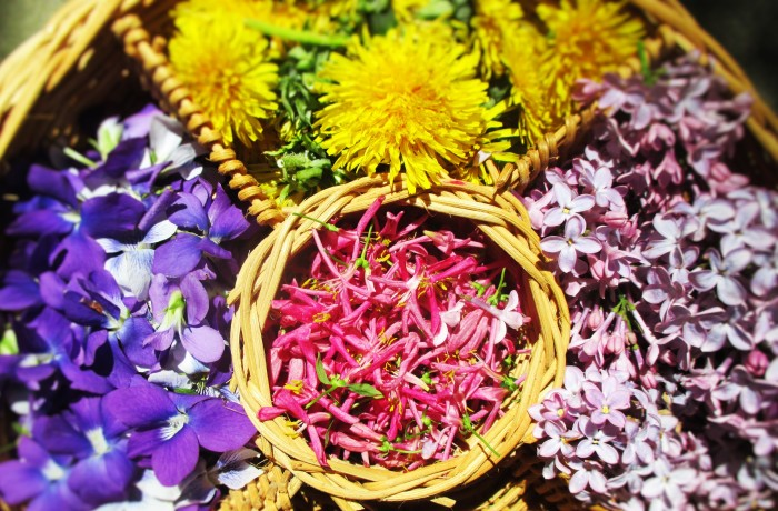 Flowers of the Herbalist | DeerNationHerbs.com