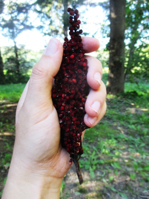 It's sumac season - and a nice time to make and enjoy sumac-ade, a refreshing and tangy beverage great for immunity, the gut, and so much more.