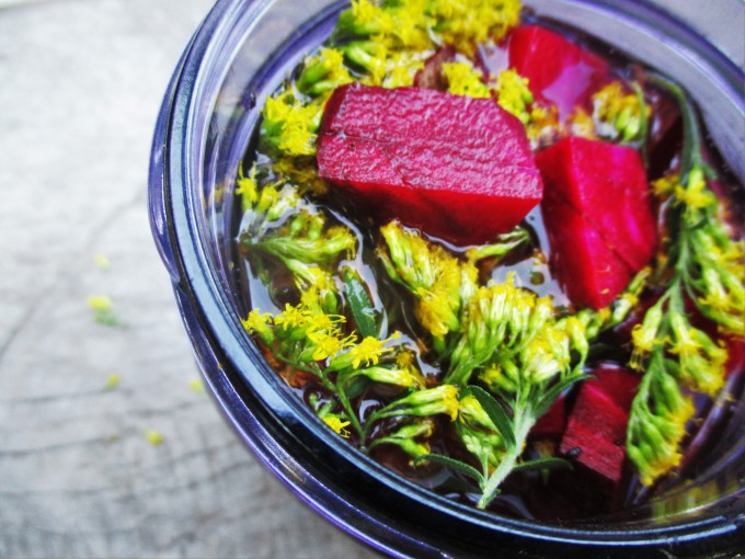Making Beet, Peach, and Goldenrod Shrub | Deer Nation Herbs
